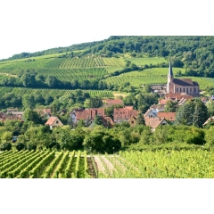 Food and wine trip in France
