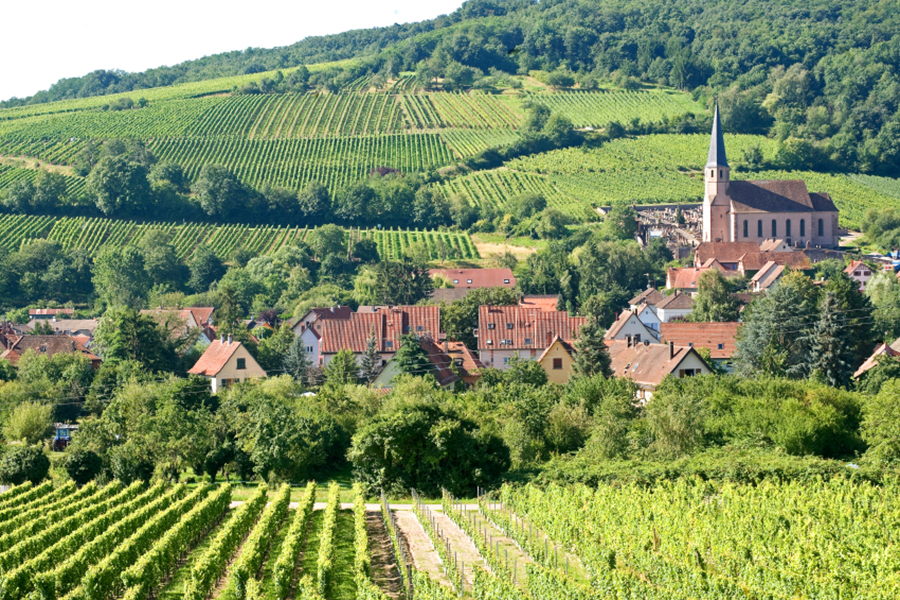 vineyard-landscape-france.jpg
